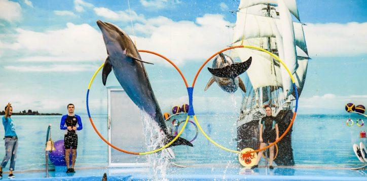 dolphins-bay-phuket-2